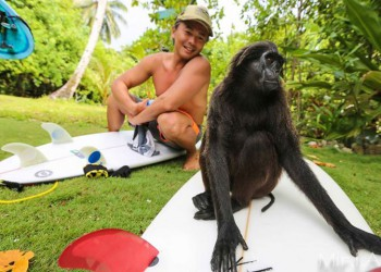 Monkey business at Togat Nusa